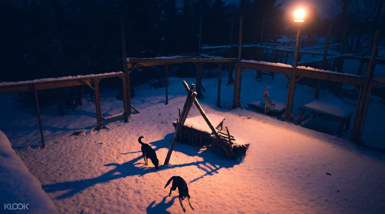 感受北欧静谧的夜晚,身旁还有可爱的哈士奇陪伴